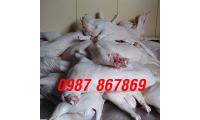 Thịt cừu Ninh Thuận, thịt cừu tươi Phan Rang giá sỉ