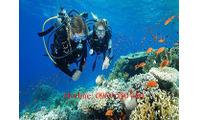 Tour 4 đảo Nha Trang - 120K - DT 0969 550 460 - Lặn biển chỉ với 350K