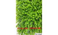 Tấm cỏ giả, tấm cỏ nhựa, cỏ miếng treo tường  tại Hà Nội