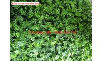 Mua cỏ nhựa trang trí tường giá rẻ tại Hà Nội