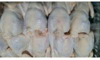 Cần đối tác nhập khẩu gà tại Việt Nam số lượng lớn