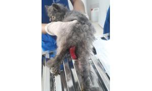 Dịch vụ tiêm phòng cho chó mèo tại nhà